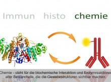 Immunhistochemie, Sekundärantikörper
